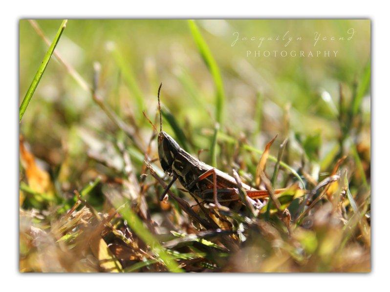 Views At Dawn - Grasshopper Three 2014