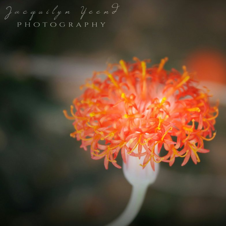 Spring Is In - Orange Bloom 2014